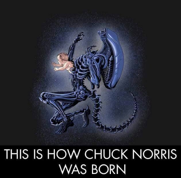 This is for a reader. You know who you are.  #ChuckNorris #ItLives