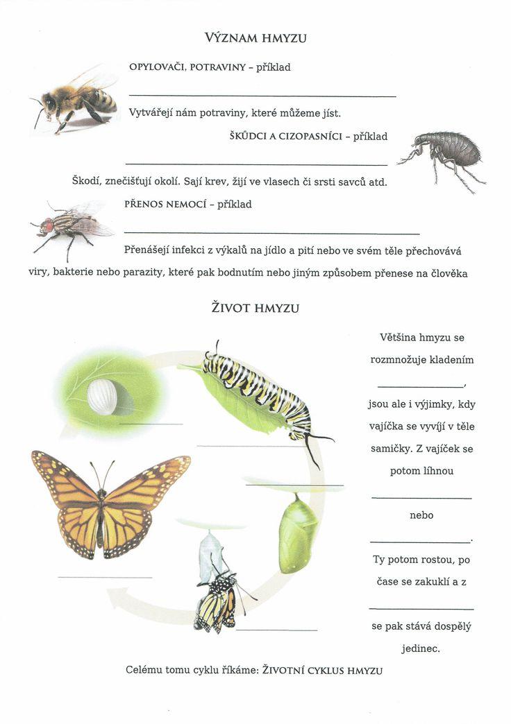 Bezobratlí - Hmyz 2 (Význam a život hmyzu)