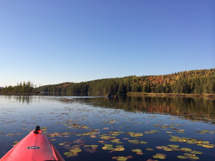 Canoes and kayaks can easily be rented at @algonquinoutfit on Lake Opeongo. Costello Creek provides an intimate backdrop to wildlife watching, as well as a different perspective to leaf peeping! #fallcolors