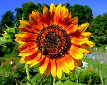Detailed Instructions for Building a Sunflower House