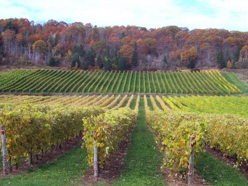 16. Gaspereau Vineyards - 25 best wineries in Canada, yeah Nova Scotia!