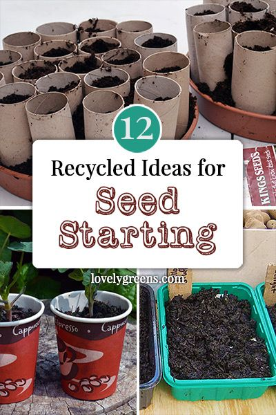 Ideas for starting off your seeds in recycled materials and containers including toilet paper rolls, eggshells, and upcycled plastic cloches