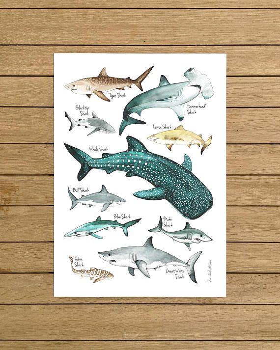 Sharks Poster Watercolour Illustration Sharks Print Shark Etsy Watercolor Illustration Illustration Shark Nursery Decor
