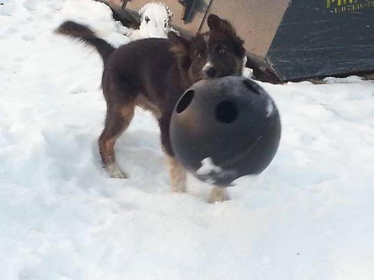 Felix ist mit einem leeren raufutterball vollkommen glücklich