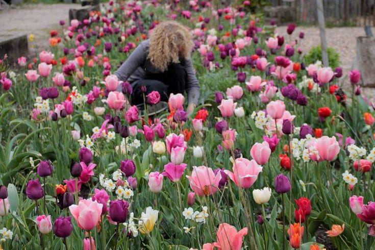 De toren tuin, tulpen, tuinblog