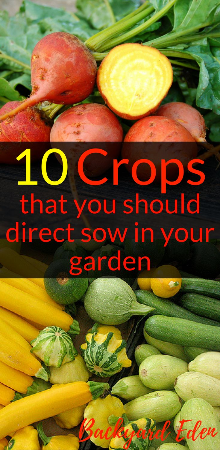 10 Crops that you should direct sow in your garden | Direct sow Vegetables | Direct sow fruits | Direct sow seeds | Seed Starting | Organic Gardening | Organic Gardening for Beginners | Planning a garden | Organic Fertilizers | Gardening Tips | Vegetable Gardening