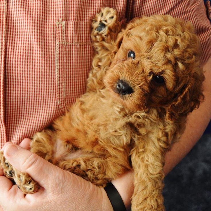 OhEmGee Whiz, I wish he were mine!