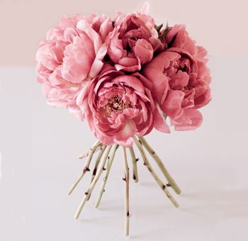 this is a nice shade of blush for peonies