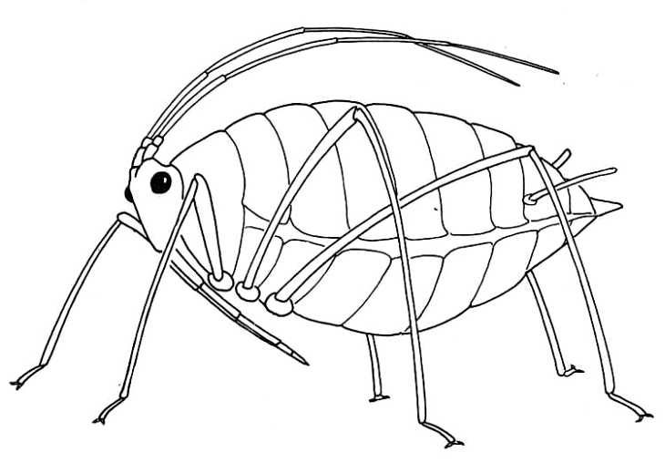 Line Drawing Insects : Best images about insecty crabby legs on pinterest