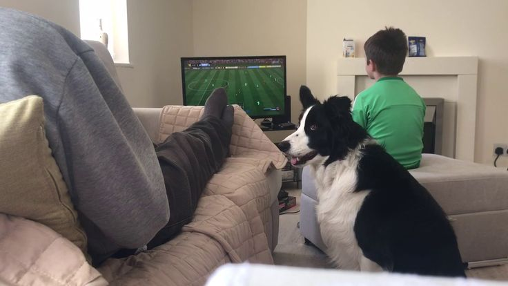 Trying to play FIFA whilst living with a Border Collie  https://youtu.be/vOMXwA3jCcQ