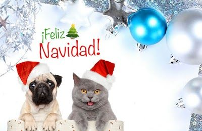#Tarjeta de #Navidad de #Perros y #Gatos Ternura #dog #doggie #kitty #kittycat #purina #catdog #whiskas #christmas #cards #free #greetings #greetingsfree http://bit.ly/11c95L3