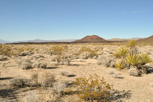 Mojave National Preserve (California): New Year in the parks / anno nuovo nei parchi