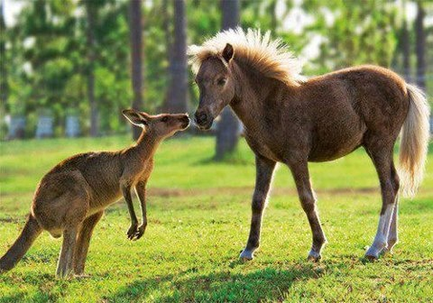 A friend accepts us as we are yet helps us to be what we should.  ~Author Unknown: Beautiful Horses, Baby Horses, Equine, Beloved Horses, Kangaroos, Color Horses, Animals Birds, Animal Friendships, Barn Buddies Horses