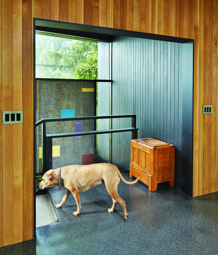 Lola heads toward the front door. The entry is highlighted by plywood panels featuring a Mondrian-like geometric pattern painted by the architect, James Chiarelli. (Benjamin Benschneider)