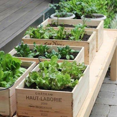 Eco-Friendly Wine Box Gardens... perfect for a balcony garden!