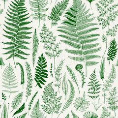Seamless pattern. Ferns. Vintage vector botanical illustration. Green