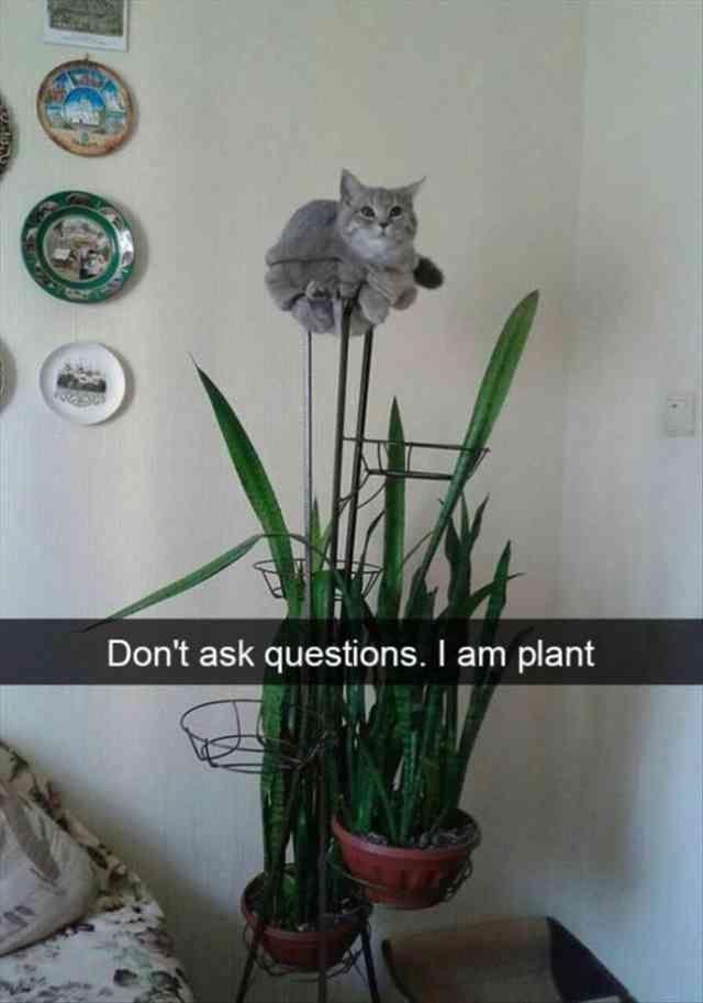 Katzen hassen Wasser! – Funny Cats in Water Compil…