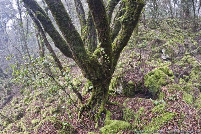 Scopri la Tuscia e la Maremma: I 10 boschi più belli della Tuscia