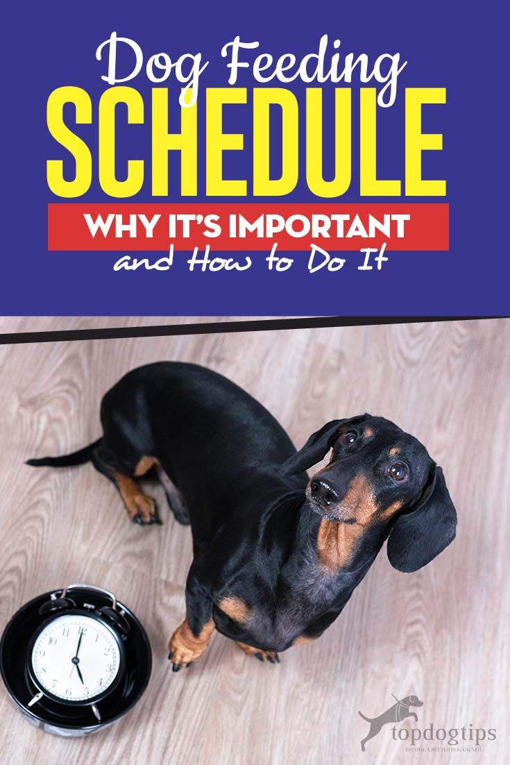 Dog feeding schedule why its important and how to do it
