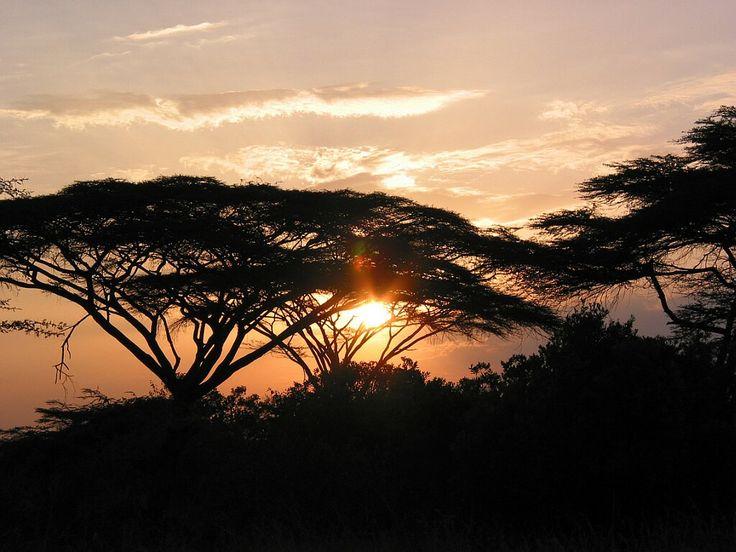 Les 25 meilleures id es de la cat gorie coucher de soleil africain sur pinterest nature - Felin de la savane ...