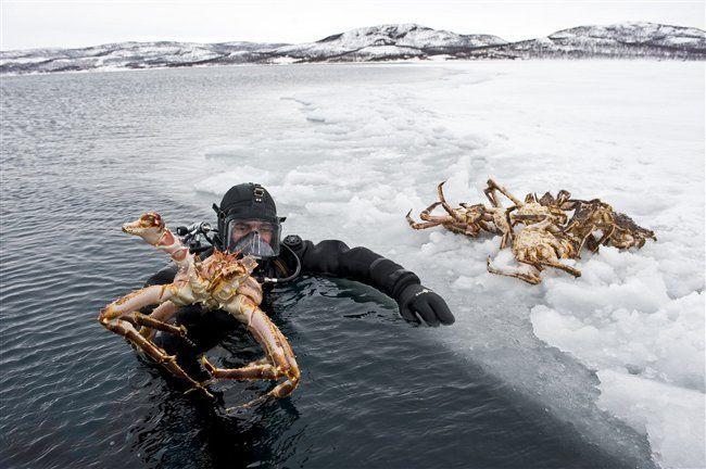 safari de cangrejo rojo real en el norte de Noruega