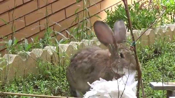 Conejo locooooo