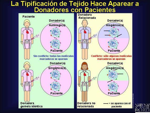 Estos trasplantes contendrán antígenos que son algo similares–pero no idénticos–a aquéllos de los del (de la) paciente.