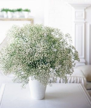 The Simplest Bouquet:  Long considered mere filler (and unwanted filler, at that), baby's breath is strikingly lovely on its own when gathered in a large, airy bunch. Sold at most florist shops, it's inexpensive and neutral enough to work in any setting. Drop a generous handful into a tall ceramic or glass vase.Babies Breath, Baby Shower Ideas, Baby Shower Favors, Shower Baby, Baby'S Breath, Baby Shower Games, Baby Breath Centerpieces, Milk Glasses, White Room