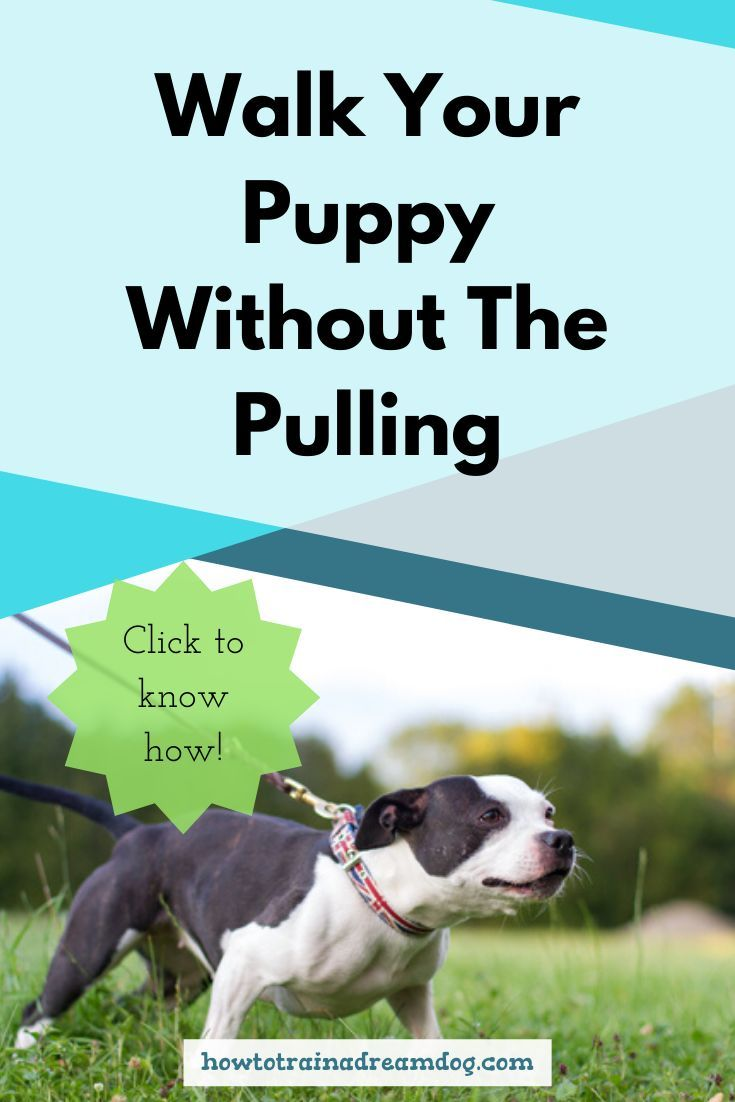 Walk Your Puppy Without The Pulling Puppies Puppy Training Tips