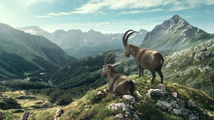Client - Graubünden Tourismus Agency - Jung von Matt Limmat Creative Direction - Samuel Christ, Maurus Zehnder Text - Alain Eicher Art Direction - Lukas…