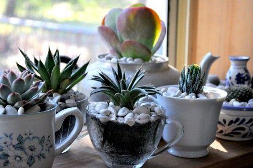 windowsill teacup succulent garden