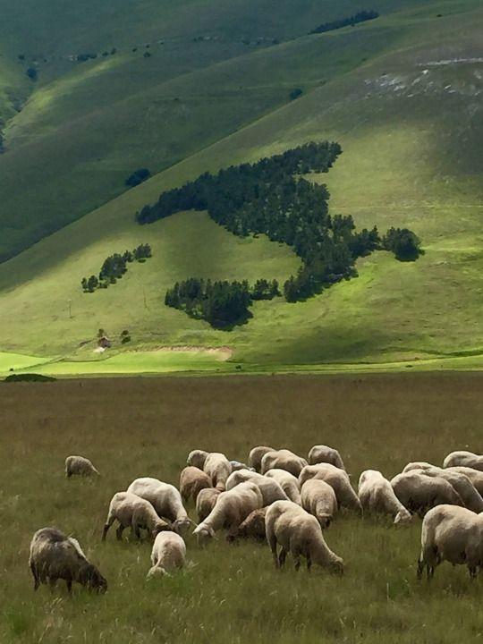 Pian Grande, Castelluccio di Norcia, Monti Sibillini, Italy Per me uno dei più…