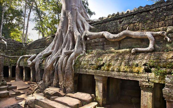 Angkor Thom, de door het oerwoud ingenomen tempel in het Angkor complex. Rondreis - Vakantie - Cambodja - Angkor Thom - Oerwoud - Cultuur - Tempels - Angkor Wat Tempelcomplex