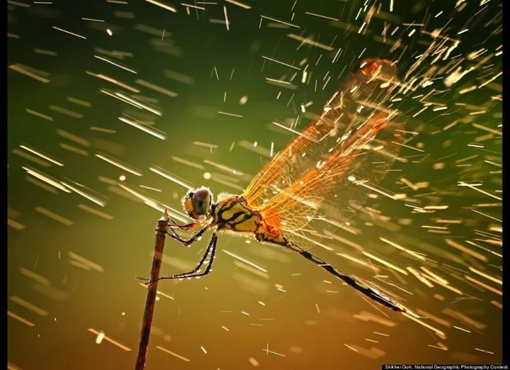 Dragonfly in the Rain....One of the winner photos in National Geographic 2011 - Most Exciting World