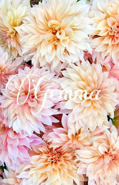 Girl names: Gemma