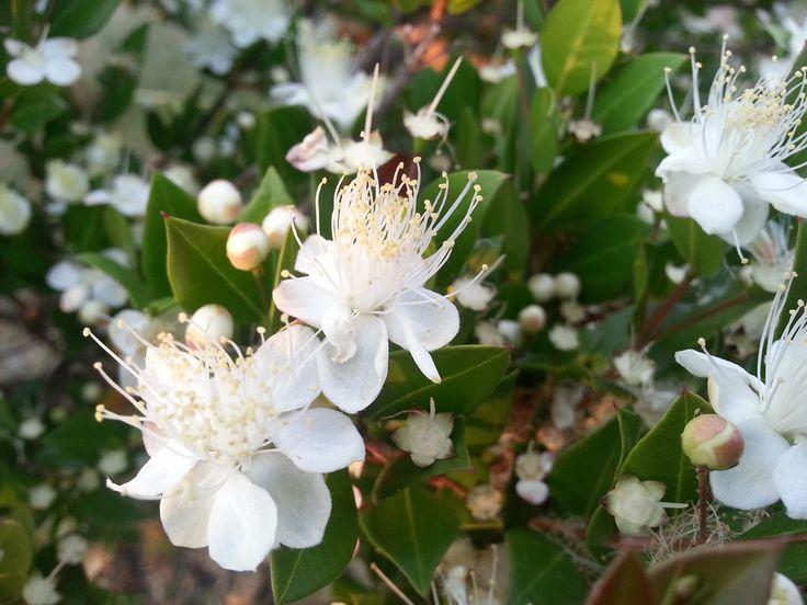 La Mortella in fiore. Alla scoperta del Monte Rotaro e Bosco della Maddalena, tra i sentieri dell'isola d'Ischia. #iloveischia