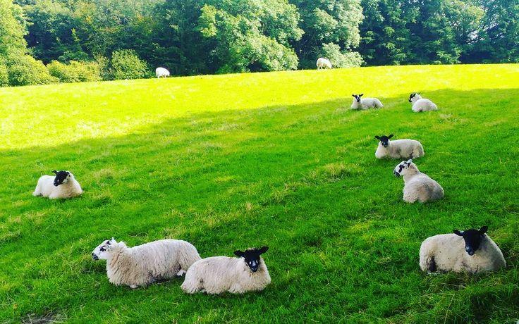 ピーターラビットが生まれた村、ニアソーリーへ。  #イギリス #湖水地方 #ピーターラビット #ニアソーリー #羊 #フットパス #丘 #散策 #夏休み #旅行…