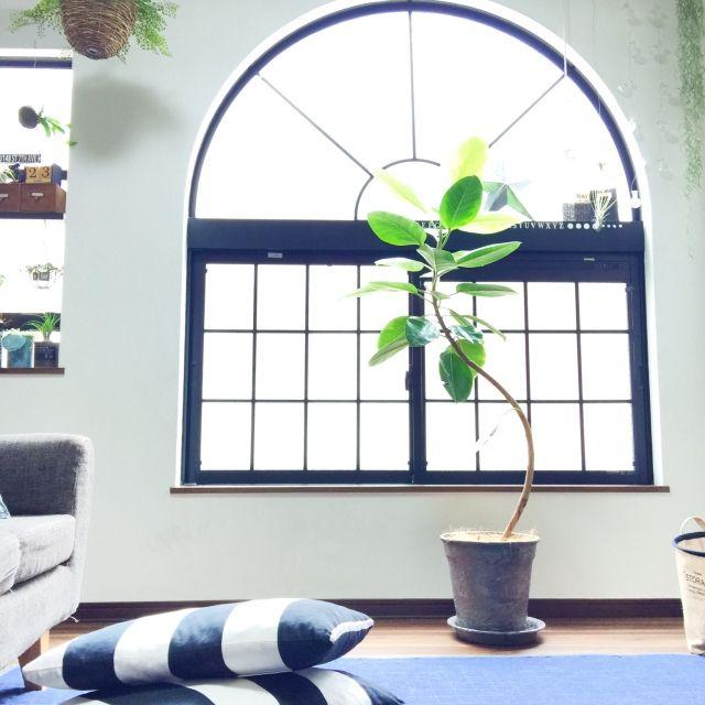 kiki0220さんの、いつもいいねありがとうございます♡,錆色マステを植木鉢に♫,カモ井加工紙さん,mt,mt CASA,デニムラグ,IKEAクッション,観葉植物,中古住宅,ZOO会♡,塩系インテリアの会,関西好きやねん会,ゴムの木,部屋全体,のお部屋写真