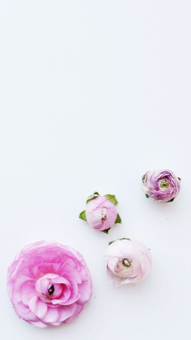 Minimal white pink floral flowers iphone wallpaper phone ...