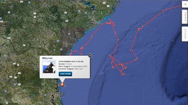 18-foot great white shark tracked to northeast Florida   News  - Home. OCEARCH Global Shark Tracker Powerd by CATERPILLAR.