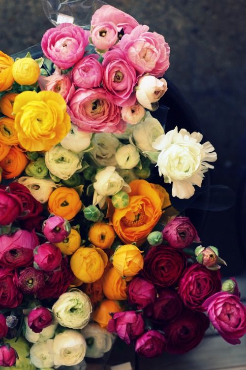 Ranunculus : Ranunculus, Bouquets, Colors Palettes, Wedding Flowers, Beautiful Flowers, Gardens, Fresh Flowers, Colors Flowers, Peonies