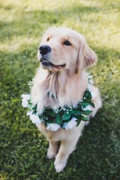 Dogs wearing floral