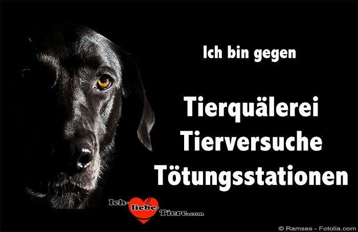 Ich in gegen Tierquälerei, Tierversuche, Tötungsstationen!