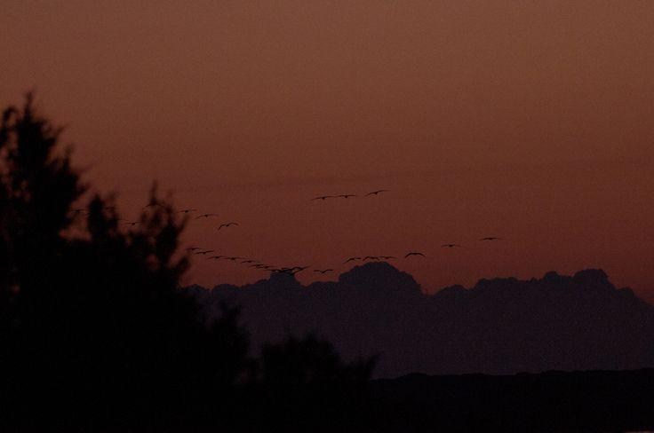 l'ultima foto  di  Guido Frilli Scrivere nuovo chatmail 19.11.2011 alle 23:41, Licenza: I diritti d'autore di tutte le foto sono propri...