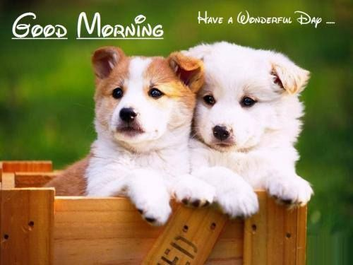 Good Morning Have A Wonderful Day Cute Quote morning good morning morning quotes good morning quotes morning quote good morning quote cute good morning quotes good morning quotes for friends and family good morning wishes