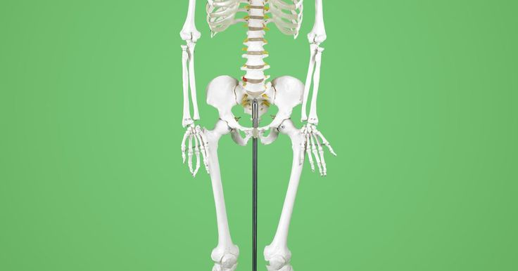 Cómo hacer un esqueleto de cartón. Ya sea que te estés preparándote para Halloween o preparándote para enseñar a una clase de jóvenes sobre el cuerpo humano, es posible que desees tener un esqueleto en la mano. Puedes encontrar estas decoraciones populares de Halloween en la exhibición en casi todas las tiendas tienda cuando se acerca el otoño, pero es rápido, fácil y barato hacer ...