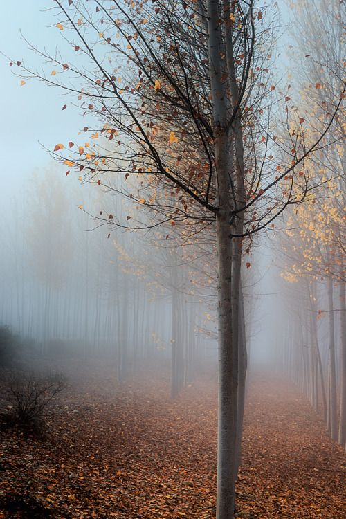 wowtastic-nature:  PastelbyMariano Belmaron 500px○ 683✱1024px-rating:79.5☀Photographer:Mariano Belmar,Murcia,España