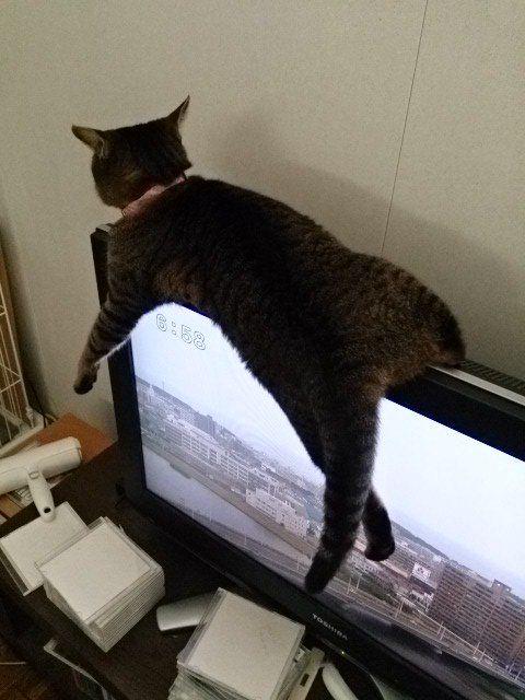 ネコのために使っていたブラウン管テレビを4K40インチの液晶に買い換えたところ、悲劇が… - Togetterまとめ