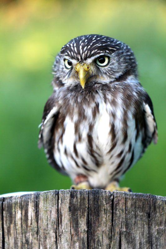 owl baby bird on a tree