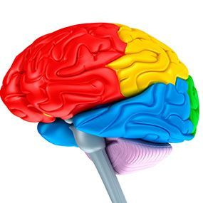 The 25+ best Frontal lobe dementia ideas on Pinterest | Function ...